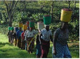 Tanzania kaffe, aekvatorkaffe