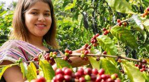 espresso Ecuador fra APECAP