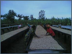 Rwanda kaffe, filterkaffe